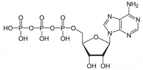 Adenosintriphosphat_protoniert