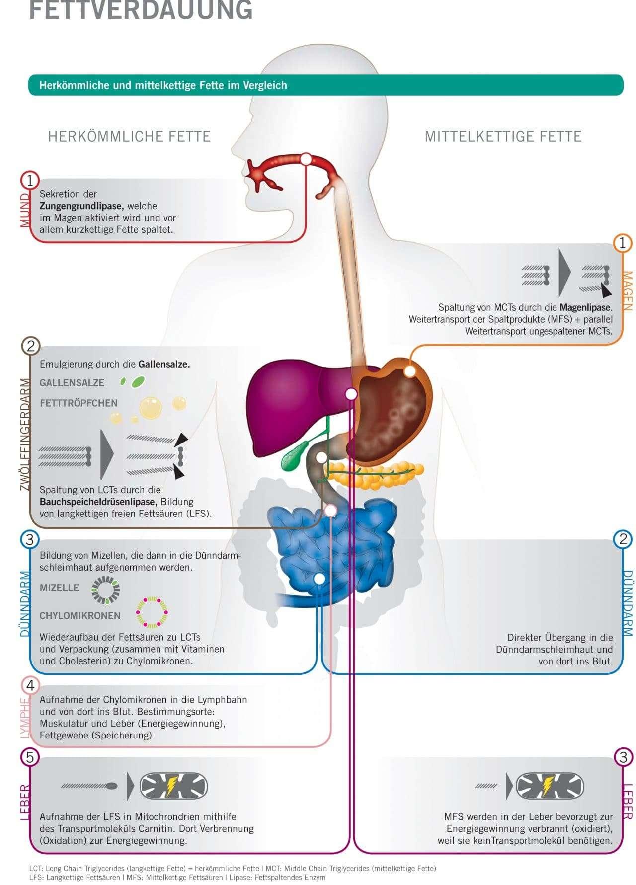 fettstoffwechsel ernährung