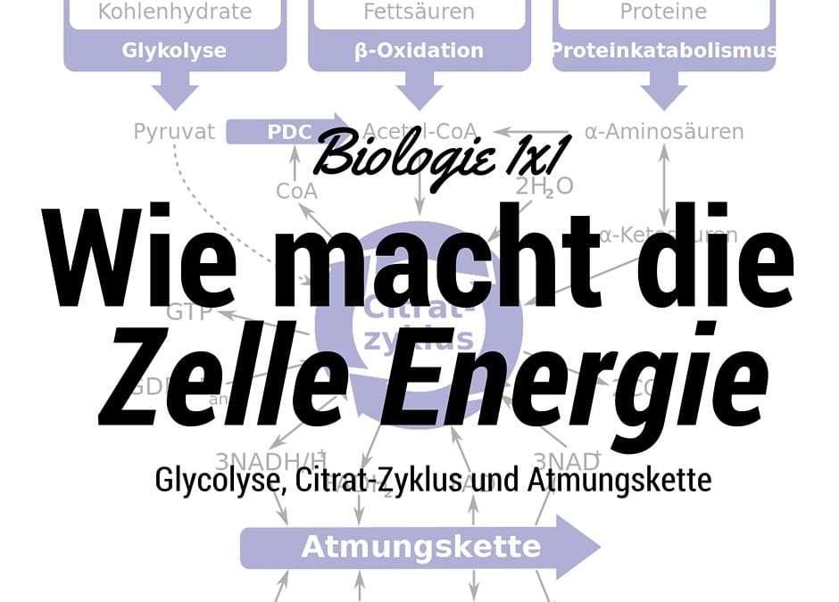 Wie macht die Zelle Energie?