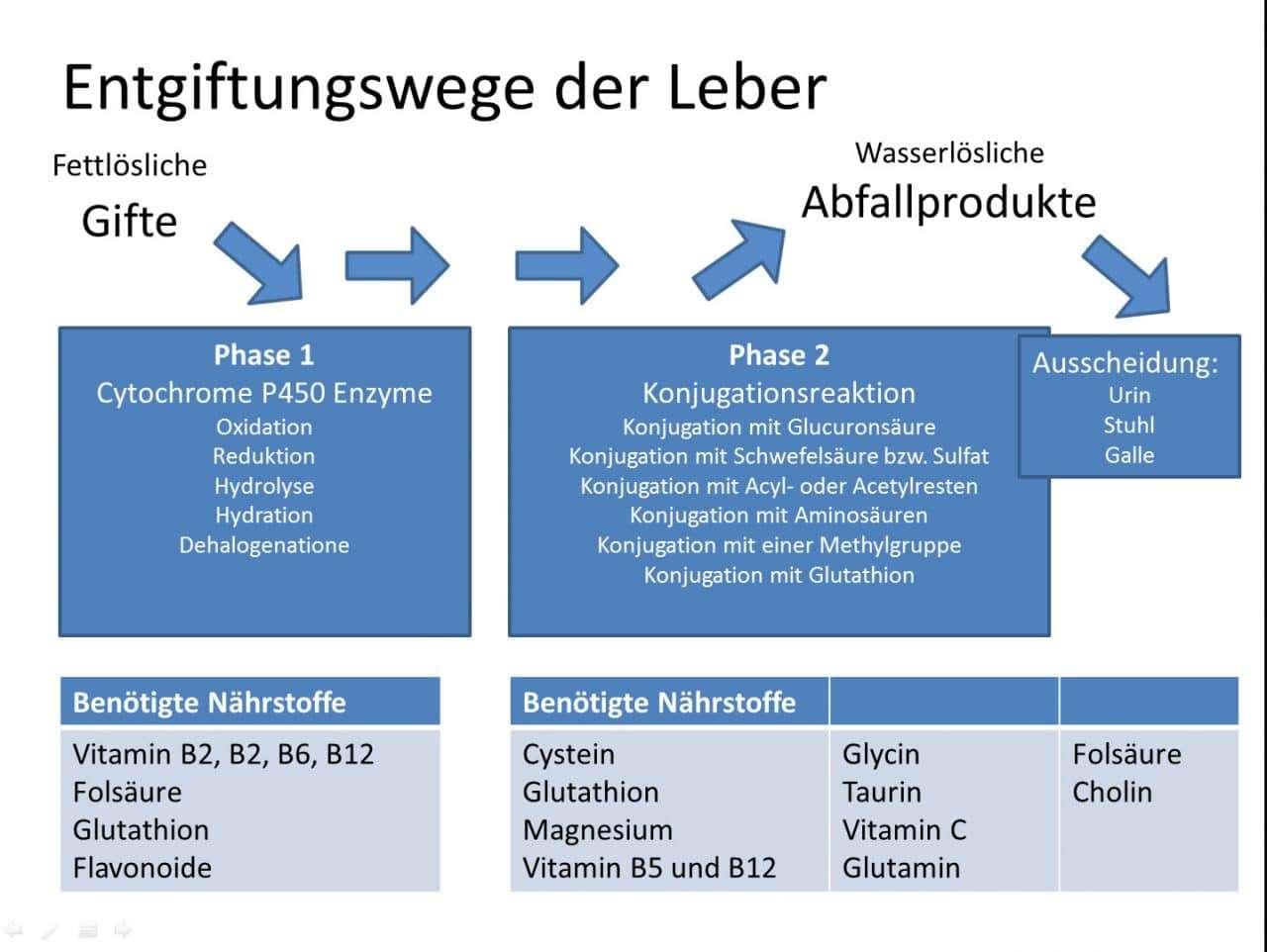 Phase 1 und Phase 2 Entgiftungswege in der Leber, sowie die benötigten Co-Faktoren