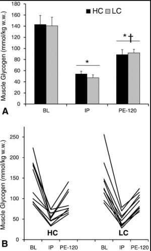 Unterschiede in Glycogennutzung und Re-synthese