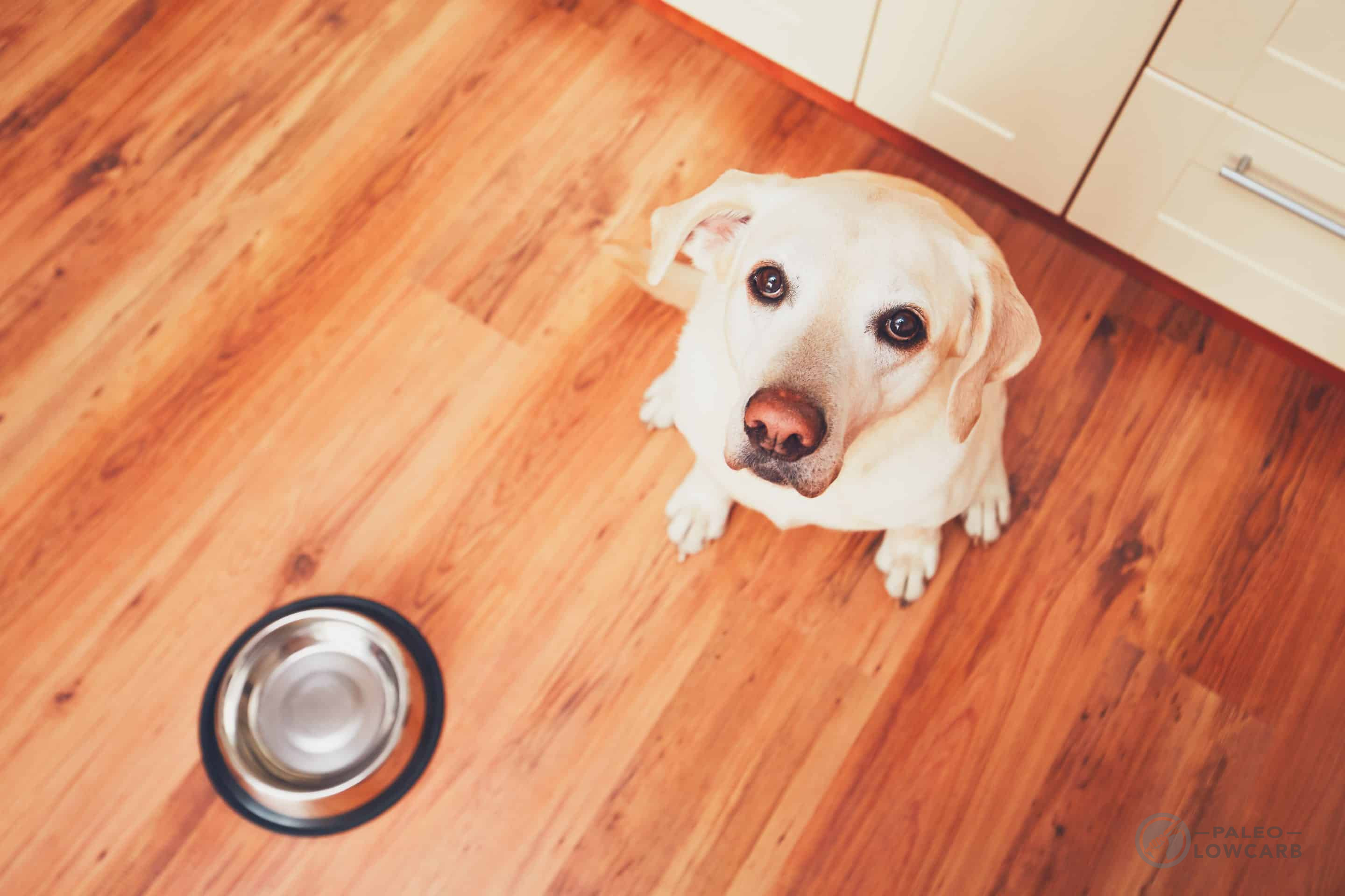 Hungry dog waiting for feeding (c) By Chalabala licensed via envato elements